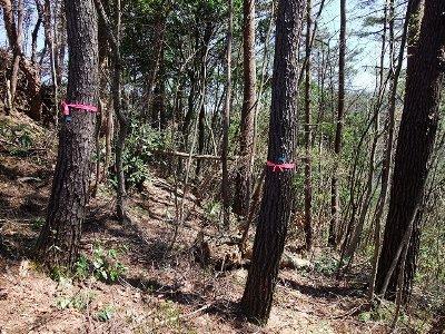 樹幹注入を実施