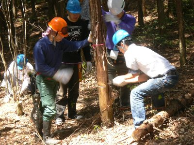 間伐と枝打ち