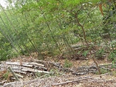 除間伐作業の実施