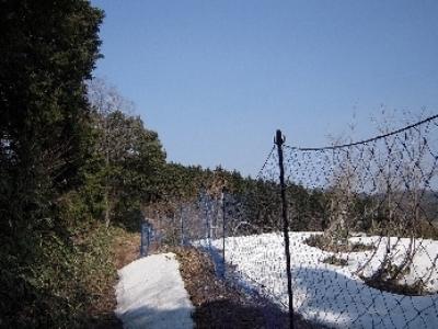 食害防止柵