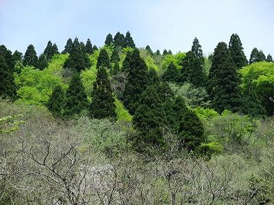 芦生原生林