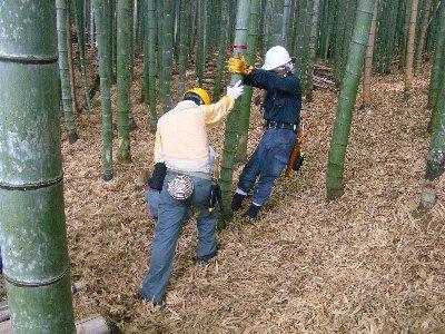 苦労しながら竹を伐採