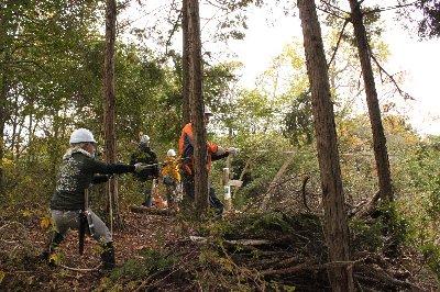 間伐の実演と体験