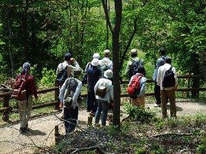 森林浴を楽しみながらの自然観察会
