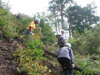 椎茸原木の伐採