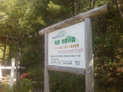 毛原の森1