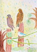 愛鳥18努力