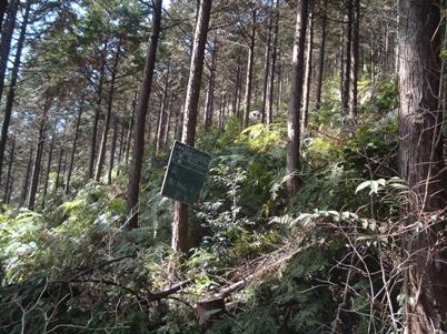 南御林山整備後