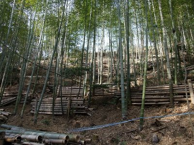 竹林整備を実施