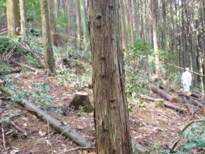 間伐で明るくなった林内