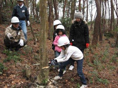 子どもたちも一生懸命木を切ります