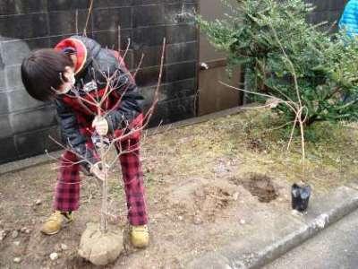 植樹の様子①