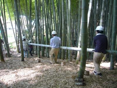 伐採した竹の搬出
