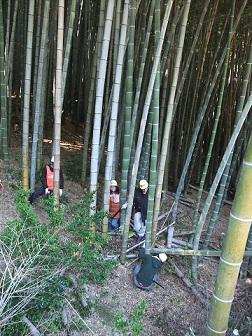 竹の環①小