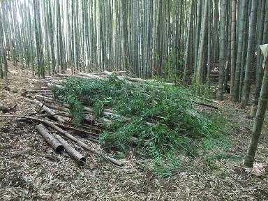 竹の環④小