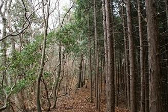天然林と放置人工林