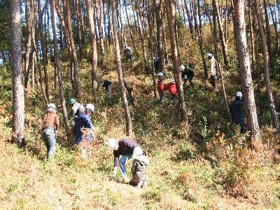 井手町でのマツ林整備