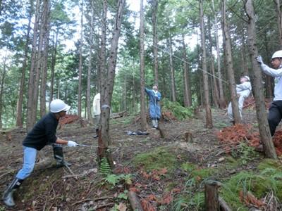 ヒノキの間伐作業