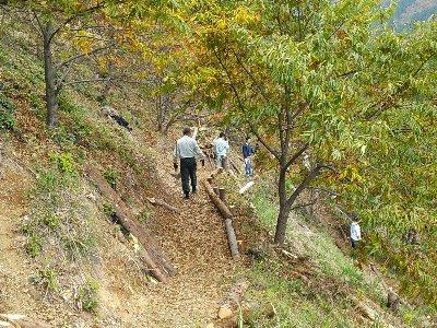 間伐材を使って遊歩道の整備を行っています