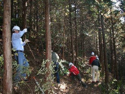 森林整備活動
