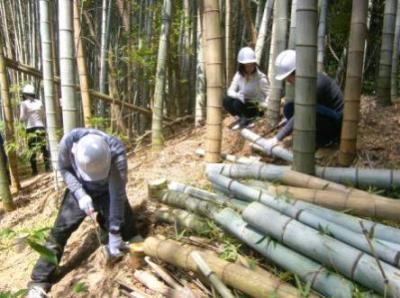 竹林を伐採中