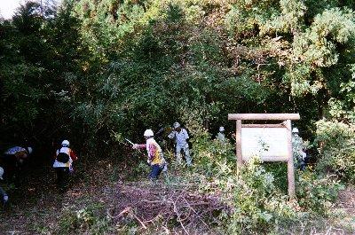 看板付近の広葉樹を整備