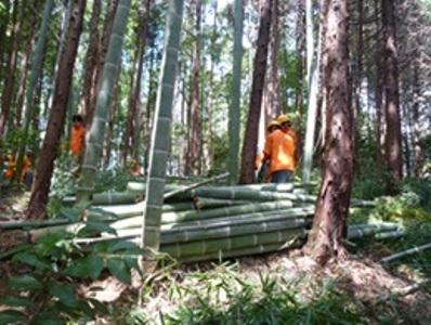 伐採した竹を玉切りにして集めます。