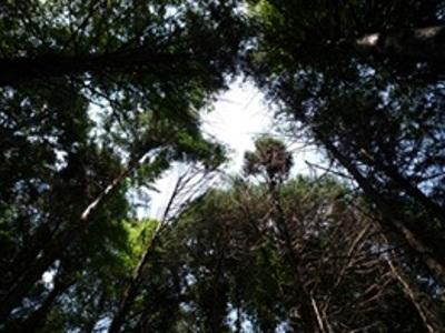 竹を伐採して、日の光が差し込むようになりました。