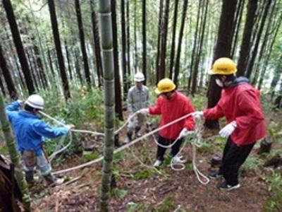 伐採作業の様子