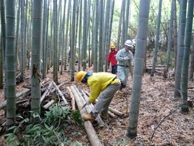 枯れて倒れた竹を玉切りにして整理中