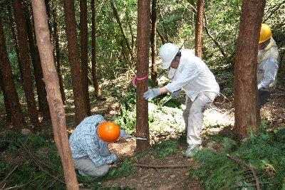 木の切り方を指導
