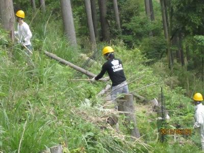 植樹箇所の下草刈り