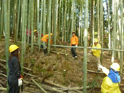伐採作業の様子。荒廃竹林の整備は大変です!