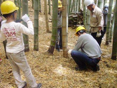 枯れた竹から伐採します