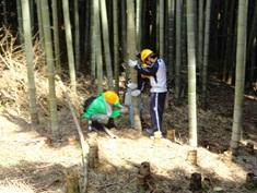 沢山生えすぎた竹を、間引くために切り倒して搬出します