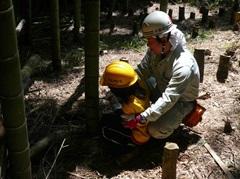 小さい子も竹の伐採に挑戦