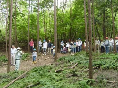森林活動の写真