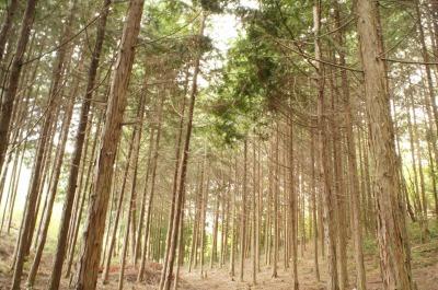 素敵な森に大変身!