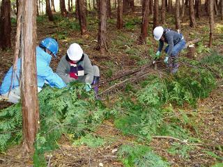 間伐体験活動の様子