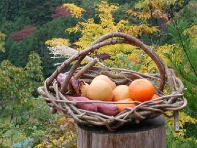 蔓かご編みの作品