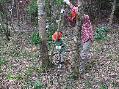 子どもも間伐作業に参加